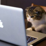 facebook creeping cat